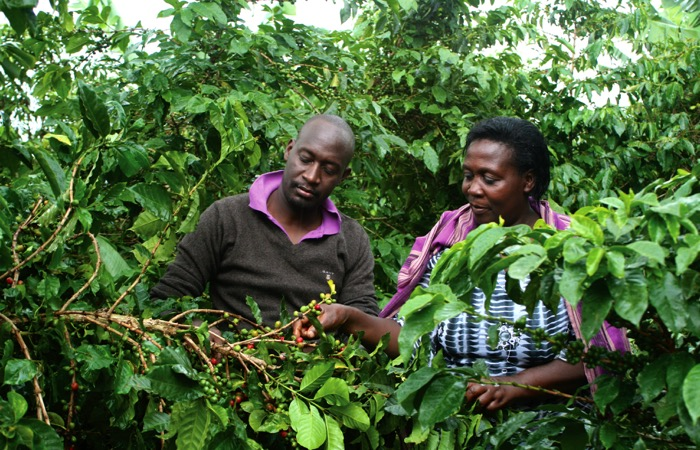 "A report, ""Fostering a sustainable agro-industrialization agenda in Uganda, has been launched with a call on the government to re-organize the scattered public resources to help finance agro-industrialization."
