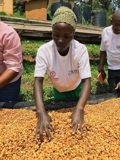 Rwanda has not witnessed any disruptions in the supply of seeds to its farmers despite the lockdown to control the spread of COVID-19, according to the Ministry of Agriculture and Animal Resources.