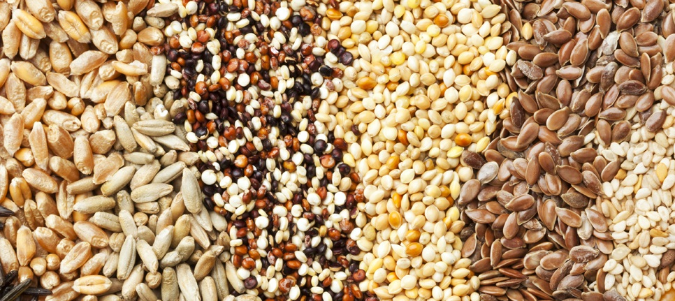 """The COMESA Business Council recently convened a webinar on """"Unlocking Food Security Through Improved Seed Trade in COMESA"""" aimed at discussing issues of access to quality and affordable seed and challenges in trade facilitation in the movement of seed across borders amidst COVID-19."""