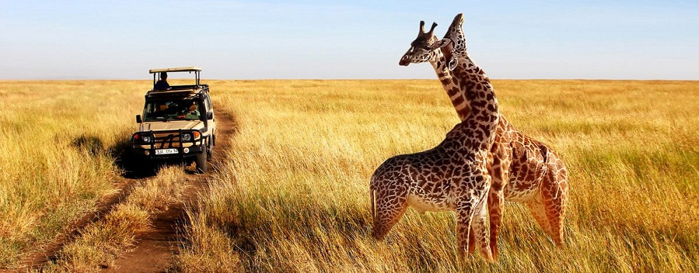 The United Nations Development Program (UNDP) is supporting the Tanzania Association of Tour Operators (TATO) to revive the Tanzania tourism industry to spur other businesses, recover thousands of lost jobs, and generate revenue to the economy.