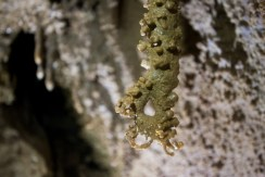 Curiosa stalattite con punta circolare nel Ramo della Faglia (foto Sandro Sedran team, archivio GSM)
