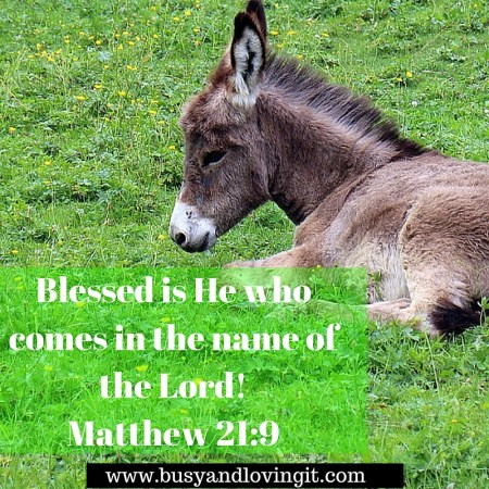 Blessed is He who comes in the name of the Lord! Palm Sunday 2016
