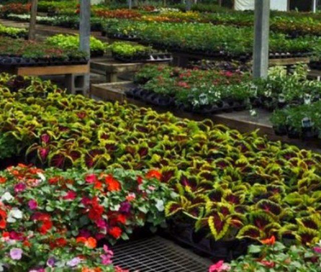 Your Local Nursery Garden Center