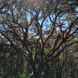 Taylor Creek South Hike at Tosohatchee WMA