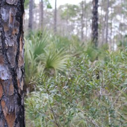 Florida Trail Big Cypress 7 red trail
