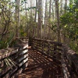 Hungryland Slough Boardwalk and FL Trail