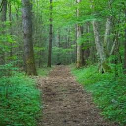 Boogerman Loop Trail in Smokey's