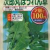 100均の種で『次郎丸ほうれん草』の育て方・栽培方法【発芽のさせ方~収穫まで】
