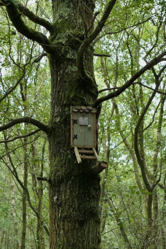 Owl's House, Winnie the Pooh, Ashdown Forest