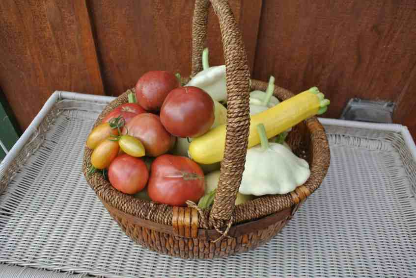 A huge basket of tomatoes and summer squash to fill our bellies.