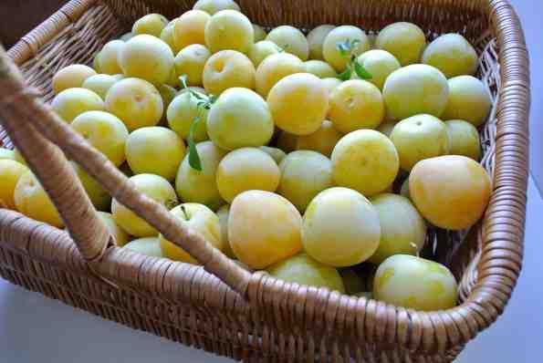 Yellow Plum Fruit Leather