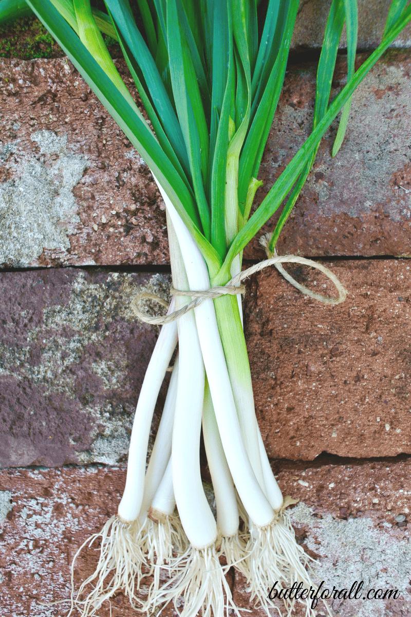 Spring Garlic – From Garden To Table