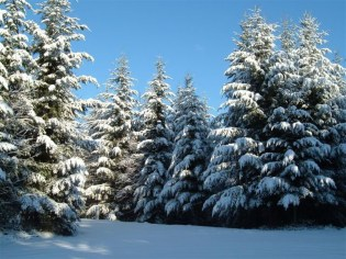 Winter in Buttes