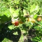 fruitstuiken 2