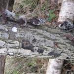 paddenstoelenbok_04