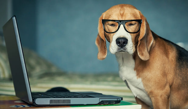 bigstock-Sleepy-beagle-dog-in-funny-gla-59457608