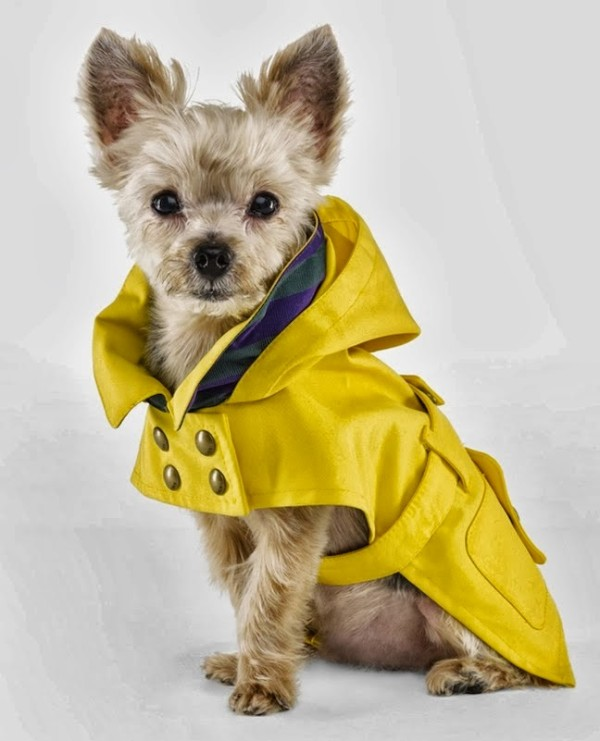 Dogs Whose Rain Game is on Point