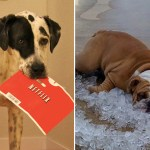 """15 Dogs Who Want To """"Netflix And Chill"""""""