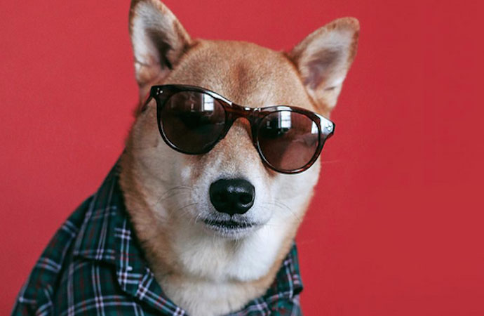 9 Instagram Dogs You Need To Follow