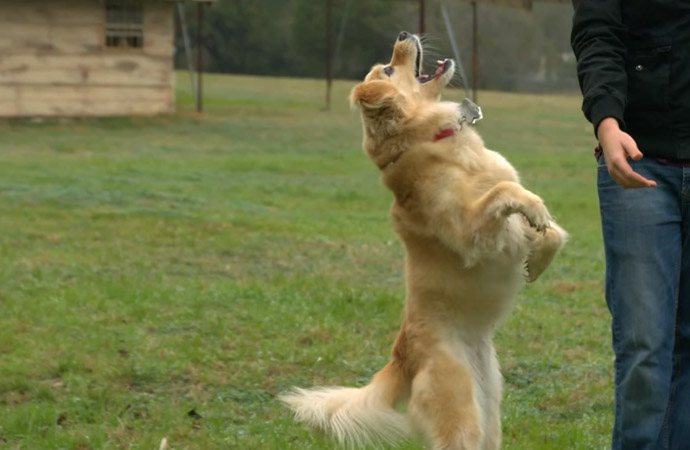 Jumping Dogs In Super Slow Motion
