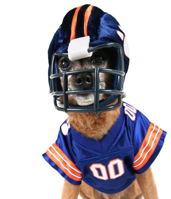 Dog in a football player costume
