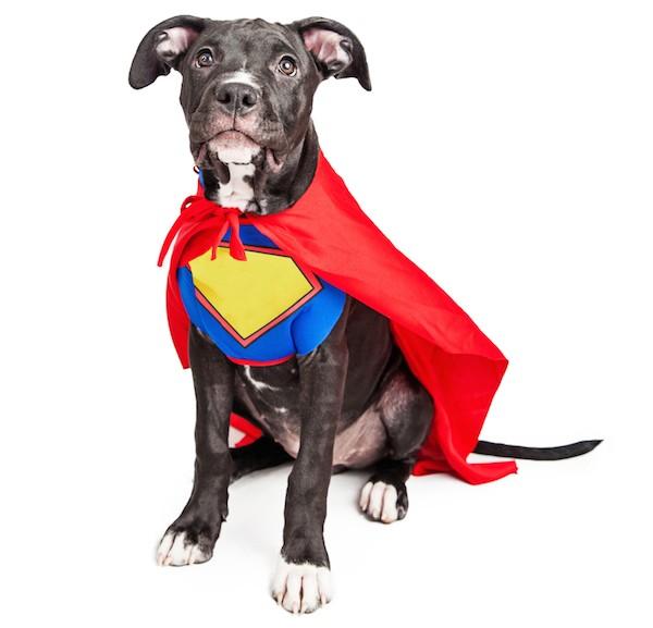 Dog dressed as a superhero