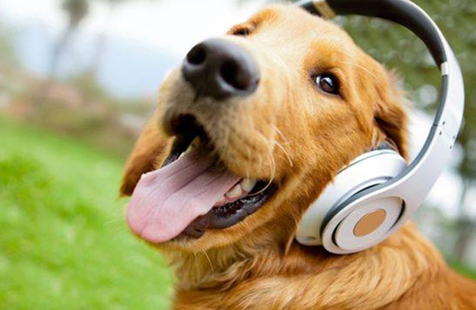 10 Songs You Never Knew Were About Dogs