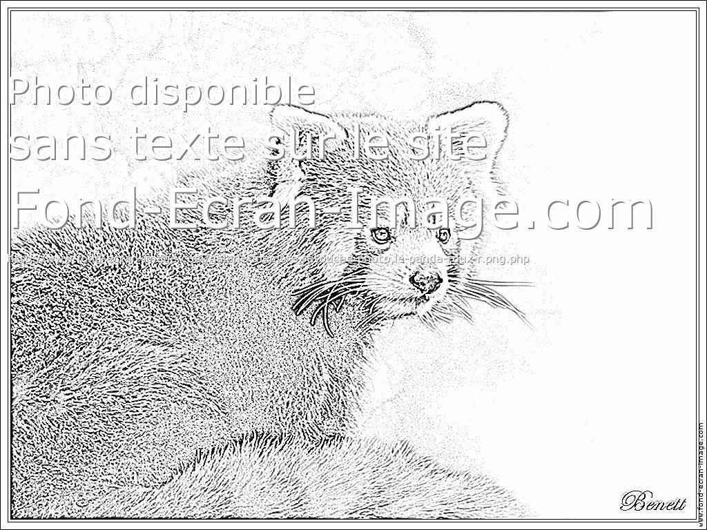 12 Dessins De Coloriage Panda Roux Imprimer