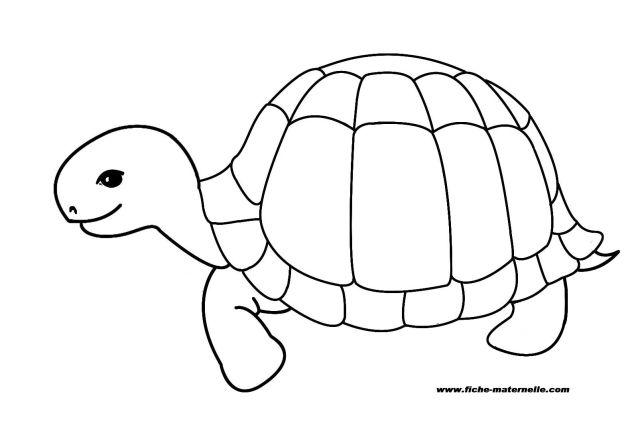 dessin gratuit samy tortue