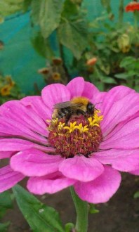 30 Fantastic Garden Flowers For Bees Fabulous garden flowers for bees  and loved by other pollinators too   Stunning in the flower border  and an abundance of colours available     from  deep