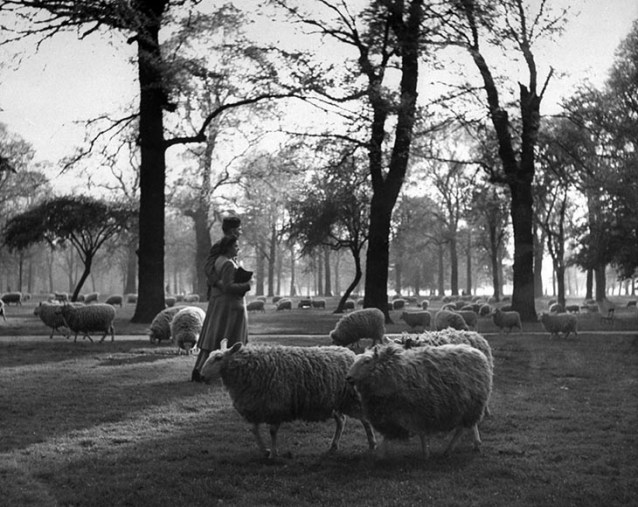 A GI And His Girl Walk Arm-In-Arm Among The Sheep In Kensington Gardens, London, 1945