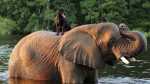 elephant dog friendship