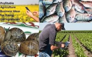 best lucrative agribusiness ideas