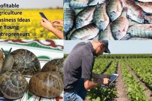 best lucrative agribusiness ideas