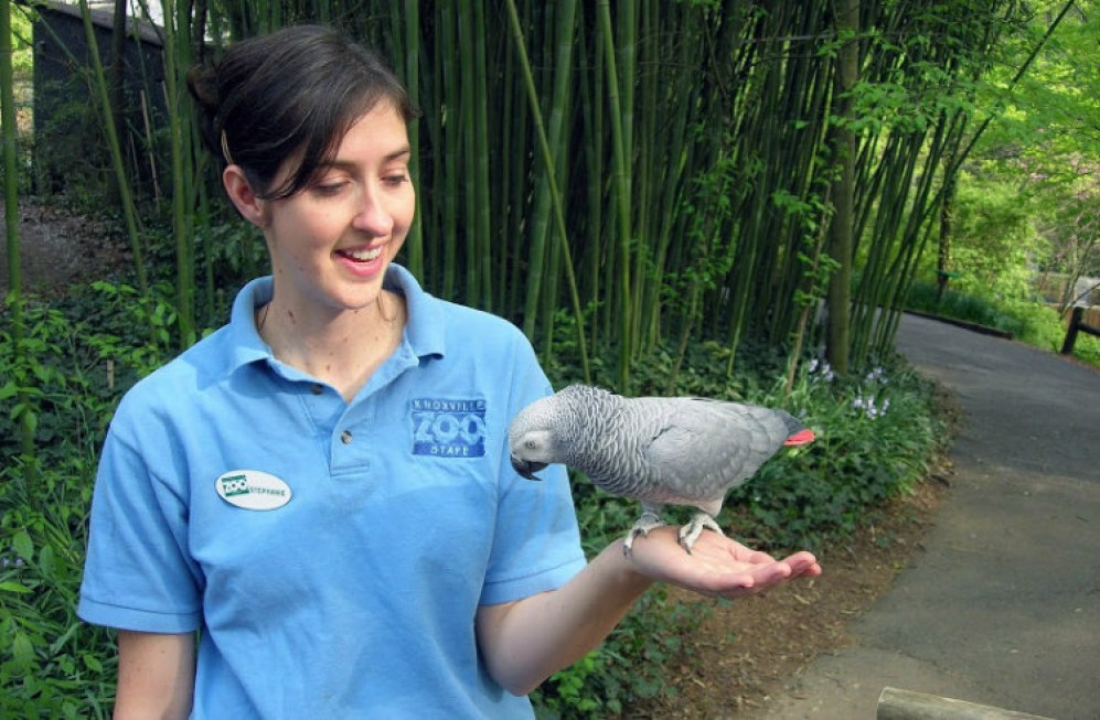 Einstein: African Grey Parrot from Knoxville Zoo- Gave TED Talk