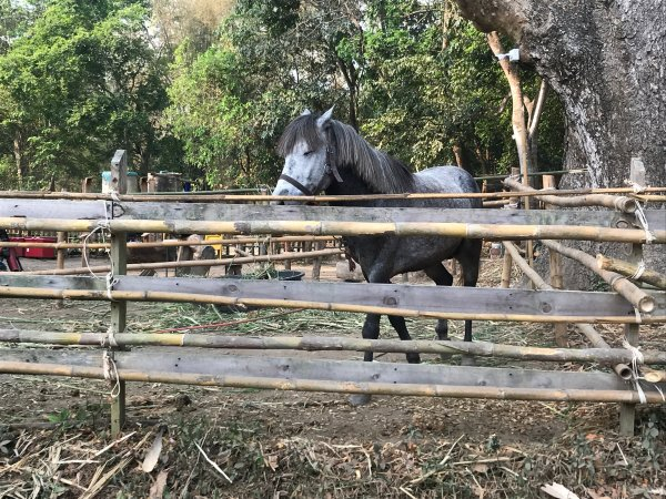 horse next to the road | Buzzy Bee Bike, Chiang Mai, Thailand
