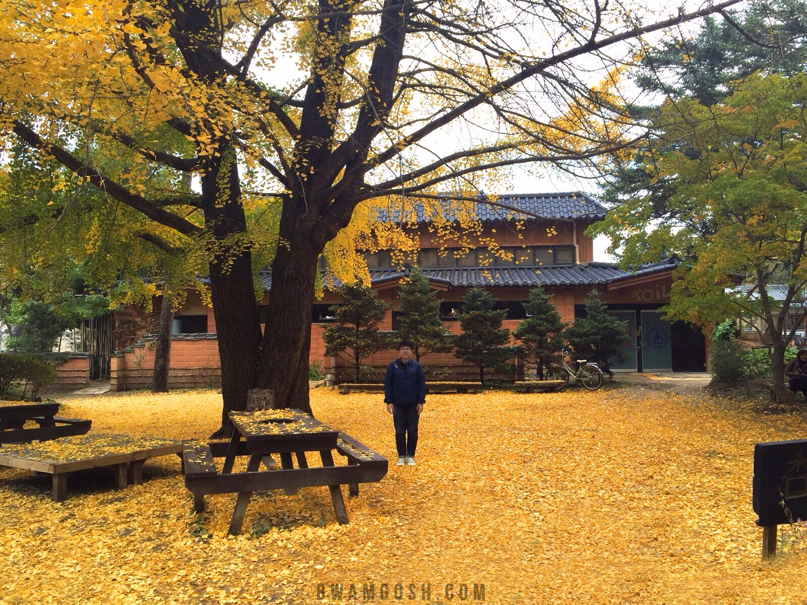 Autumn in Nami Island