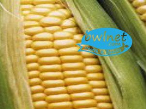bwlnet-fermented-corn-extracts