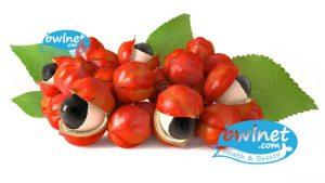 bwlnet-guarana-seeds