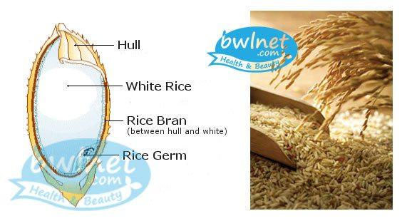 bwlnet-rice-bran-structure