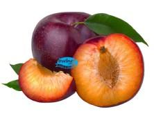 bwlnet-plum-pilihan