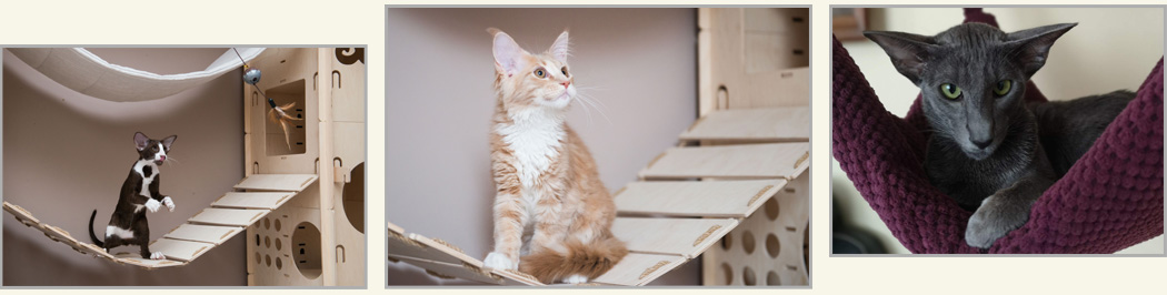 ecocatscollection-isabella-Praga-cats