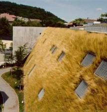 10 důvodů, proč si pořídit zelenou střechu
