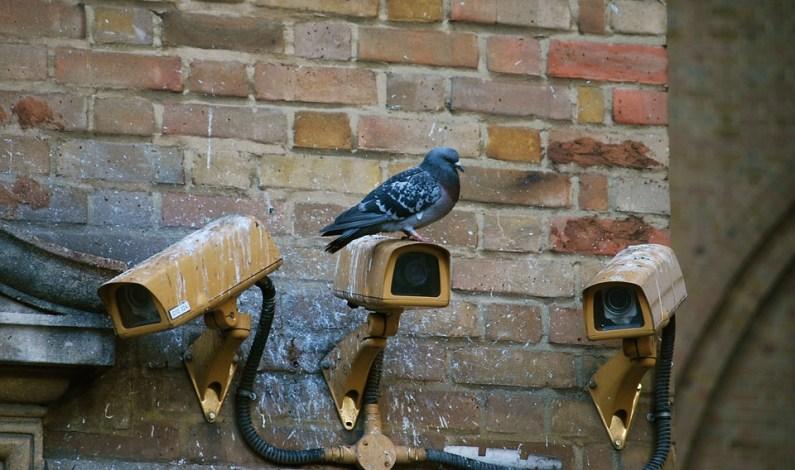 Nenechte ptáky ničit váš majetek