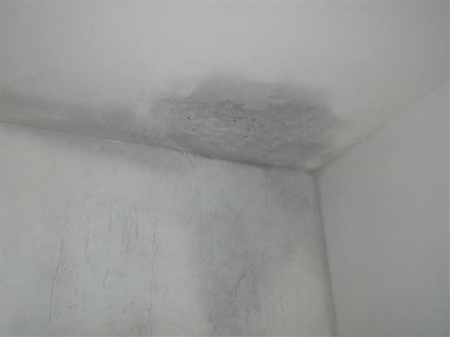 Jak odstranit plíseň z bytu? Je to snazší, než si myslíte