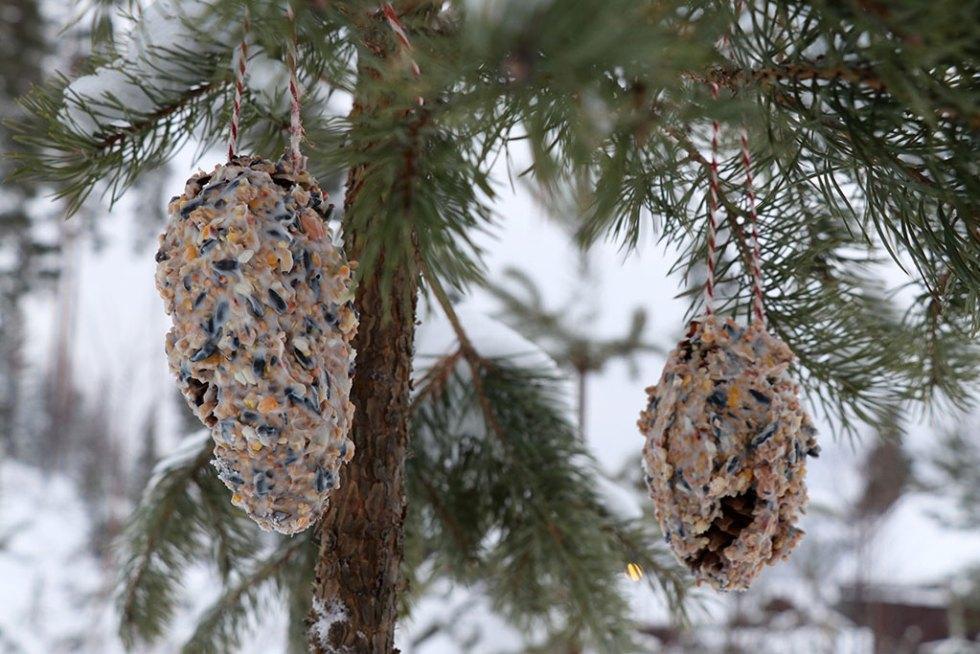 Hjemmelavede fuglekugler vinter diy