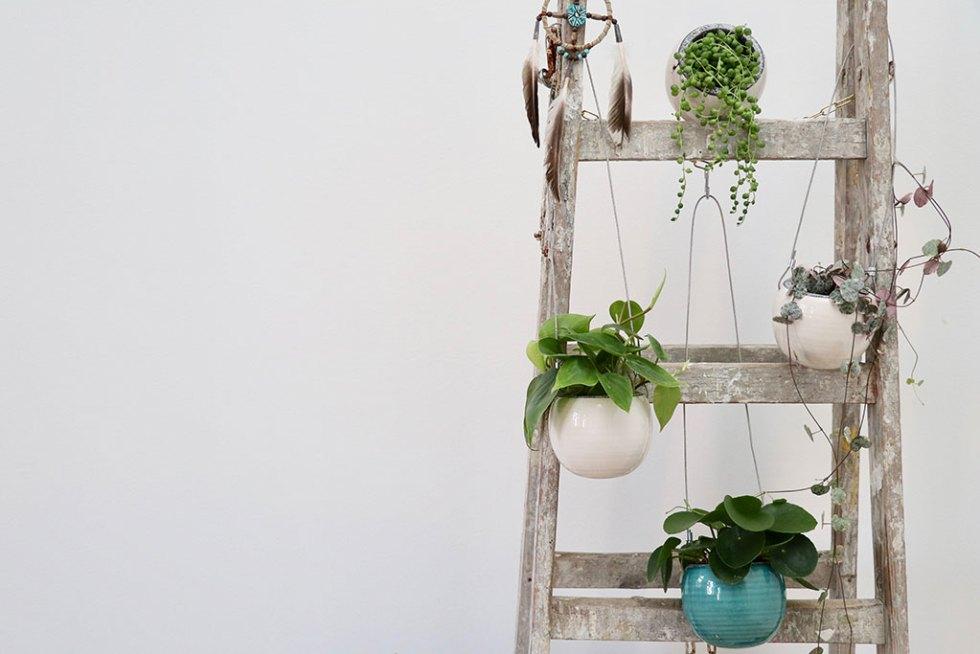Gæsteblogger hos Plantorama - og fine hængeplanter
