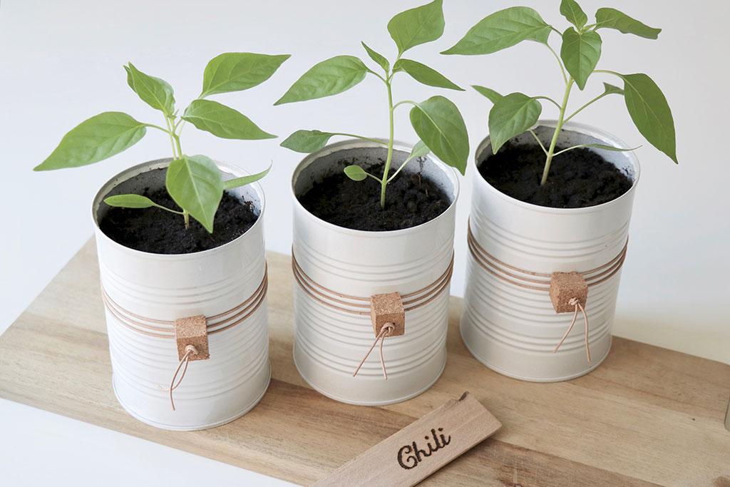 Sådan dyrker du dine egne chili - guide til chiliplanter