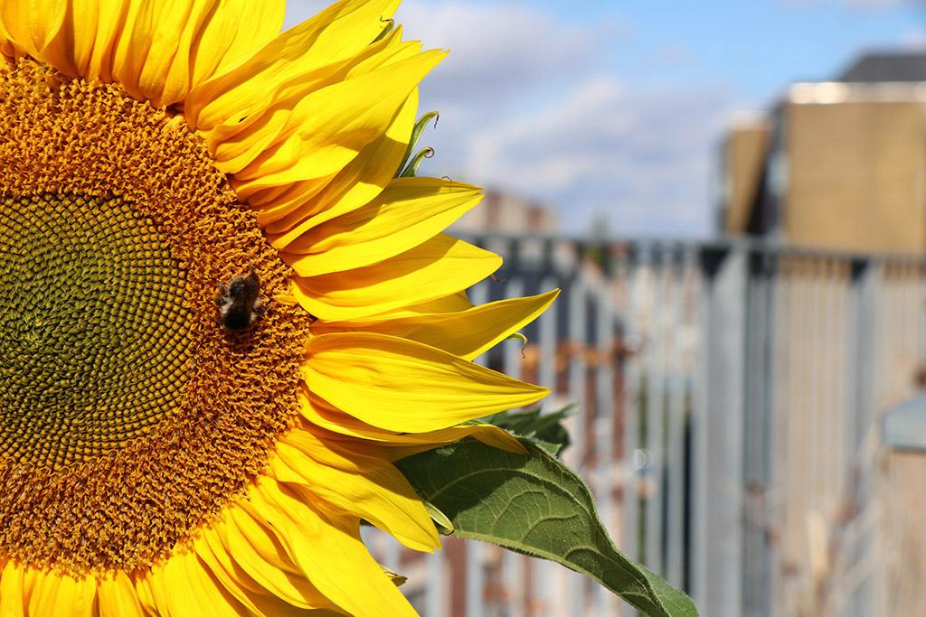 Haveplanlægning - inspiration til taghave
