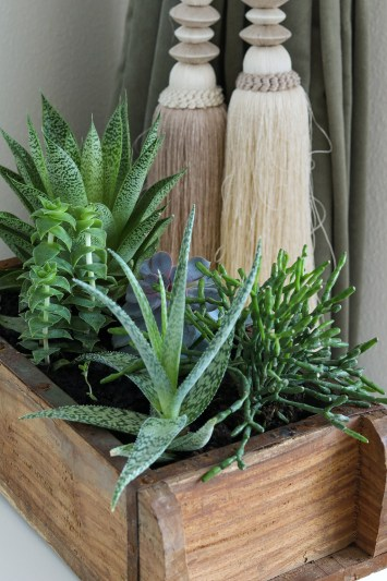 DIY sammenplantning i murstensform - få styr på dine små sukkulenter